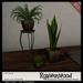 {RW} Meditation Garden Potted Plants