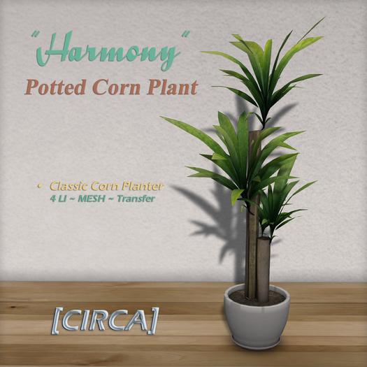 "[CIRCA] - ""Harmony"" - Potted Corn Plant"