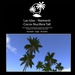 Naima Palm trees Tall
