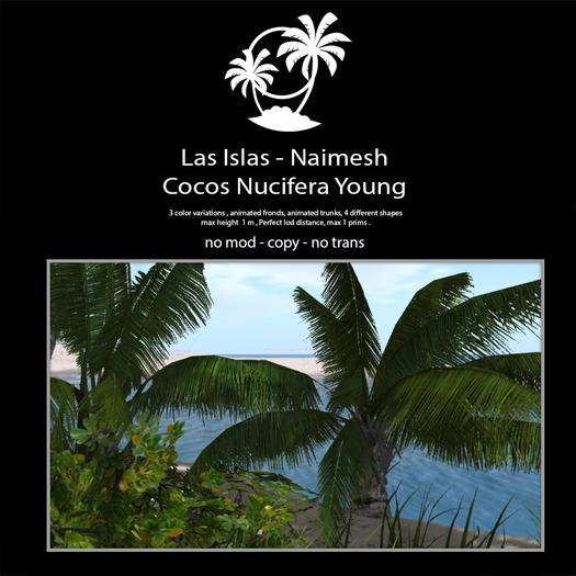 Naima Palm trees Young