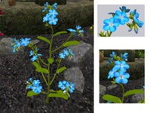 Forget Me Not Flowers - Blue - Full Perm