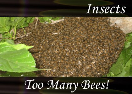 Atmo-Insects - Too Many Bees 0:20