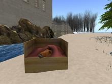 BB Horse Box
