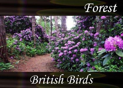 Atmo-Forest - British Birds  1:10