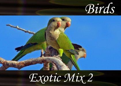Atmo-Birds - Exotic Mix 2 1:00