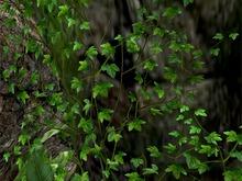 Climbing Ivy Pack - Mesh - Full Perm