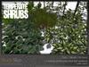 Skye temperate shrubs 2