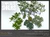 Skye temperate shrubs 3