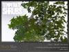 Skye temperate shrubs 4
