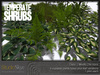 Skye temperate shrubs 5