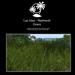 Naimesh grass