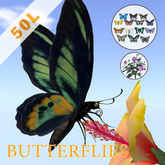Butterflies with flowers ( roaming fly and sit on flower )