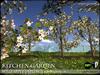 TREES - Kitchen Garden - Apple Trees - Saplings - Season Changing