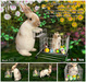 Aphrodite- The Easter delivery! - Animated bunny & hamster in trolley
