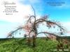 Aphrodite Easter tree -Fantasy colors-