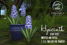 [ Organica ] Hyacinth (Light Blue)