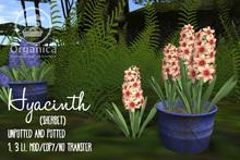 [ Organica ] Hyacinth (Sherbet)