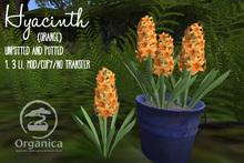 [ Organica ] Hyacinth (Orange)