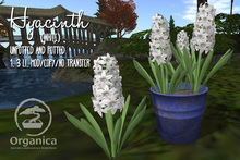 [ Organica ] Hyacinth (White)