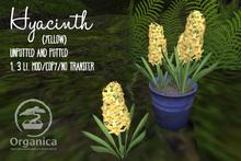 [ Organica ] Hyacinth (Yellow)