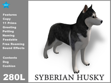 [TomatoPark] Siberian husky 3.0 ( roaming + wearable)