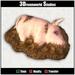Wallowing pig