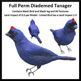 Full Perm Diademed Tanager - Boxed