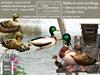 Duck, Mallard, FATPACK