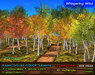 Aspen Grove Color Seasons - 6 landscapes, 20 variations, Copy+Modify