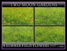TMG - 4 SUMMER FIELD FLOWERS* Meadow Grass for Landscaping