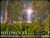 TREES - Wildwood Alder Trees - Season Changing