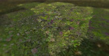 *Shabby* Country Spring Groundcover