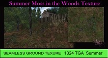 ViTa Seamless Gr Texture Moss in the Woods SUMMER 1024 TGA 02