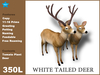 [TomatoPark]White tailed deer ( roaming animate feedable copy )