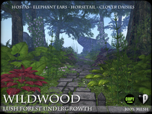 Plants - Lush Forest Undergrowth