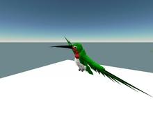 Ruby-Throated Hummingbird Avatar