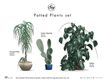 Soy. Potted Plants Set [addme]