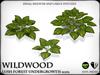 Wildwood   hosta   ref1