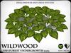 Wildwood   hosta   ref2