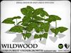 Wildwood   elephant ears   ref2