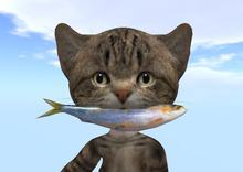 #FISH for Dinkie Cat (wear)