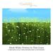 bastnut > Mesh White Flowers In Thin Grass