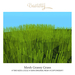 Bastet H > Mesh Grassy Grass