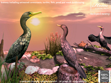 Cormorant, swamp, turtle, fish