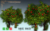 [MF] Mesh wonderland roses bush (boxed)