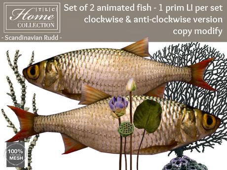 Scandinavian Rudd, fish, circling