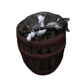 *..NL..* cat on barrel