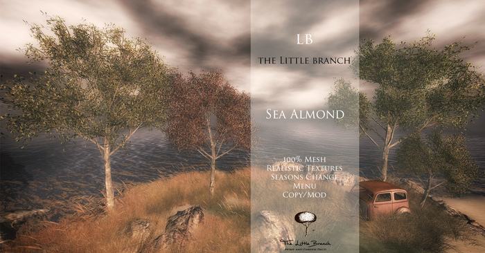LB SeaAlmond Tree 4 Seasons Mesh