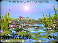 FLOWERS - Water lilies - Nymphaea Nouchali