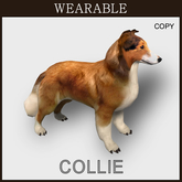 Collie_Wear_Box